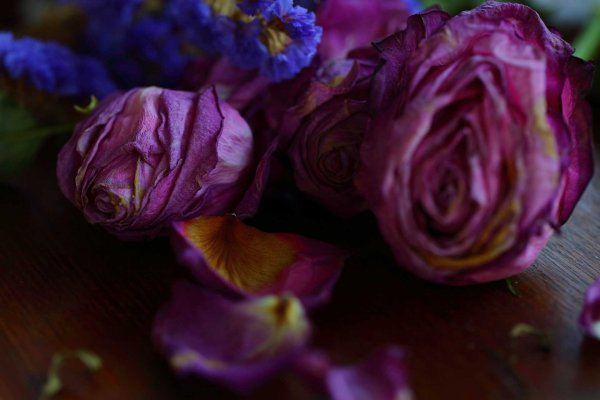 Beauty is a Dark Rose by Olivia Torma